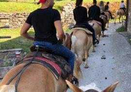 foto cavalli da badia di moscheta2