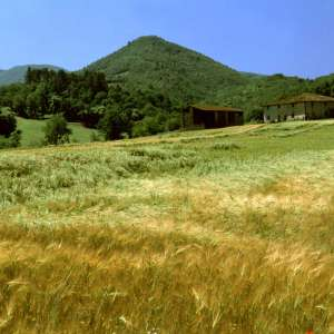 A shot of the countryside near Sagginale (Borgo San Lorenzo)